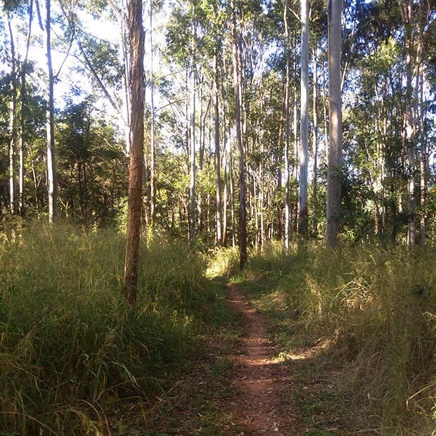 Spaziergang im Eukalyptuswäldchen